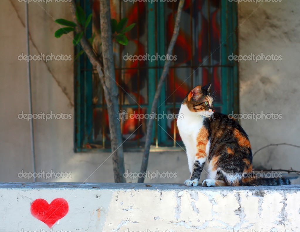 Cat on tryst — Stock Photo #12348300