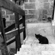 Black cat in Old Jaffa — Stock Photo