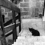 Black cat in Old Jaffa — Stock Photo
