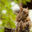 Squirrel in Green Forest — Foto de stock #40210801