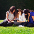 Three Friends Studying Together in Nature — Stock Photo #51538459