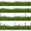 Green grass collection — Stock Photo