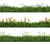 Green grass with flowers — Stock Photo