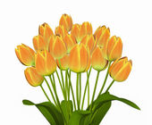 Yellow Tulips. — Stock Photo