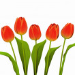 Red tulips — Stock Photo #22486373
