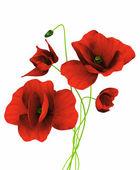 Rote mohnblumen — Stockfoto