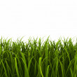 Green grass — Stock Photo #23981563
