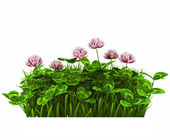 Grama verde — Foto Stock