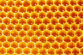 Honeycombs — Stockfoto