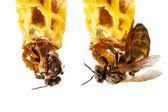 королева пчел — Стоковое фото