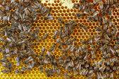 Bees — Stockfoto