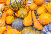 Squash and pumpkins from the market — Stock Photo