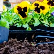 Stock Photo: Planting Flowers Closeup