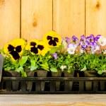 Planting Garden — Stock Photo #41045637
