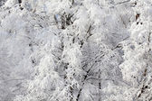 Winter landscape, freezed forest close-up — Stock Photo