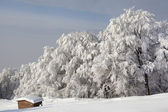 Winter forest, trees covered with snow — Stock Photo