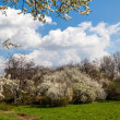 Стоковое фото: Blossoming tree in spring frame