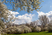 Blossoming tree in spring frame — Stockfoto