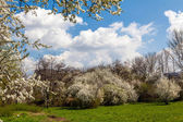 Blossoming tree in spring frame — Stock Photo