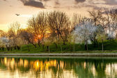 Blossoming tree in spring on rural meadow at sunset — Stockfoto
