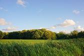 Beautiful grass landscape — Stock Photo