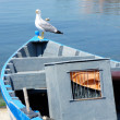 Seagull on boat — Stock Photo #28532435