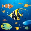 Underwater Life Vector - Stock Vector