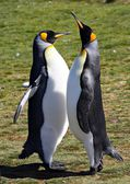 King Penguins at Volunteer Point — Stock Photo