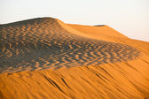 Thar Desert, Rajasthan India — Stock Photo