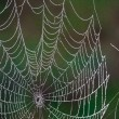 Spider web — Stock Photo #29256327