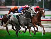 CRANBOURNE - MAY 27: Stanzior ridden by C J Davies races to the front to win the Celebrate Party Hire Hcp — Stock Photo