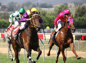 MELBOURNE - FEBRUARY 21: Sensational News is ridden to the line to finish a close second to Madam Melba in the Windy Peak Maiden at Yarra Glen on February 21, 2010 near Melbourne, Australia. — Stok fotoğraf