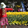 Colorful tulips - Canberra's Floriade festival — Stock Photo