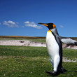 King Penguins at Volunteer Point — Stock Photo #29586047