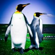 King Penguins at Volunteer Point — Stock Photo #29636191