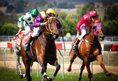 MELBOURNE - FEBRUARY 21: Sensational News is ridden to the line — Foto Stock