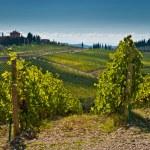Toscana — Stock Photo #14076871