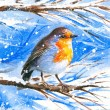 Robin in winter — Stock Photo