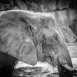 Elephant — Stock Photo #30005021