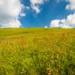 Meadow — Stock Photo
