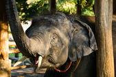 слон — Стоковое фото