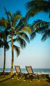 Palmiers — Photo