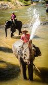 Słoń — Zdjęcie stockowe