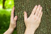 Foresters hands on oak trunk. — Stock Photo
