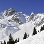 Alpine mountain and trees — Stock Photo #33957053