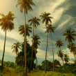 Palm trees — Stockfoto #18346621