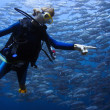 Scuba diving — Stock Photo #21096279