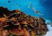 Havet. — Stockfoto