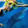 Whale shark — Stock Photo #21110103