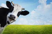 Krowa. — Zdjęcie stockowe